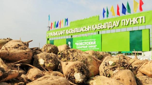 В Алматинской области восстановят еще два сахарных завода