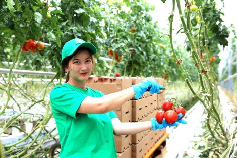 «EURASIAN GREEN PRODUCT»: ставка на томаты
