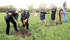 Аудан орталығына 200 түп алма ағашы егілді