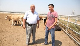 Делая ставку на мясное животноводство