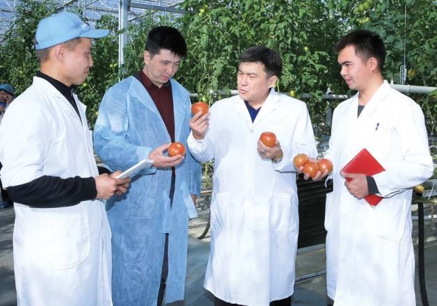 Огурцы и томаты от «Агро Импэкс Алатау»