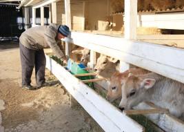 Молоко и овощи от крестьянского хозяйства «Мамед»