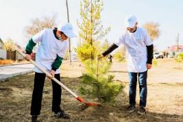 Шамалған ауылына 1000 түп ағаш отырғызылды